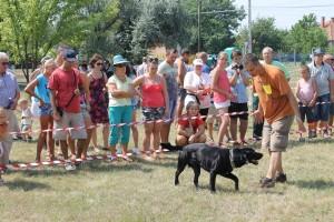 kutyaverseny Jászivány